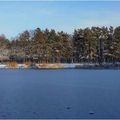 Зимняя картинка парка...