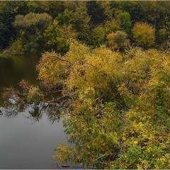 Рухнувшее дерево в спокойную реку...