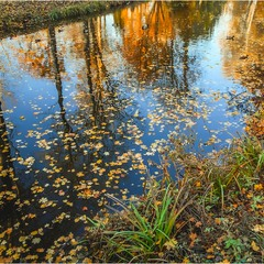 Набросала осень золотых листочков...