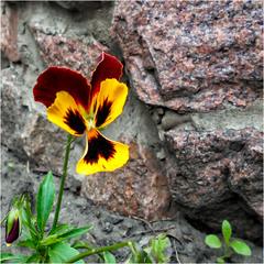 Природа на камне...