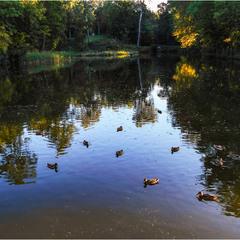 Осенний день на пруду...