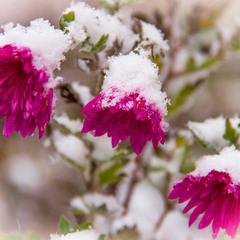 Под гнётом зимы...