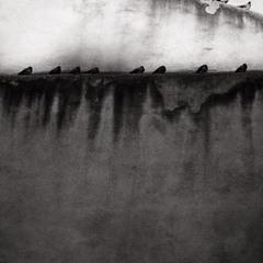 birderlines