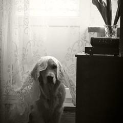 Собака Намі ховається від пилососа.