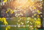 Весна на карантине