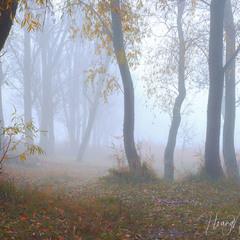 Ранок в тумані