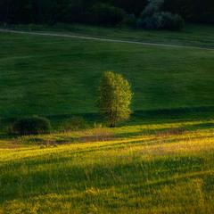 Трохи про траву і дерева