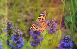 Яскравий метелик!