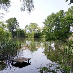 Природа біля річки