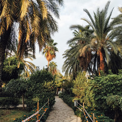 Пальми в парку
