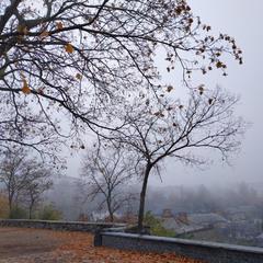 Частинка парку в тумані