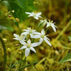 Маленькі квіти