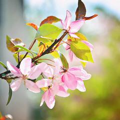 Рожевий цвіт!