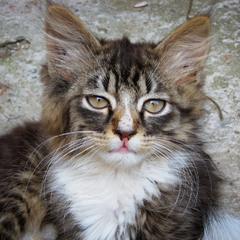Кошачий портрет