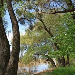 Зелені дерева