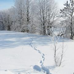 Сліди на снігу