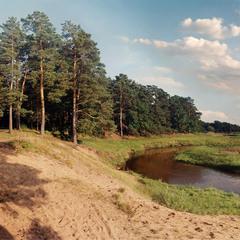 Сосны над рекой