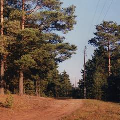 Вдоль леса