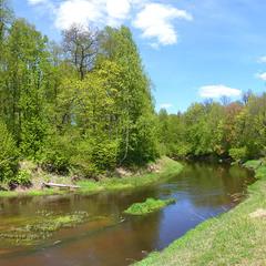 Поворот весенней реки