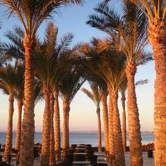 Пальмы. На Красном море утро
