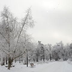 Дивовижні малюнки зими