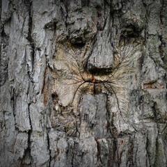 Страж леса***
