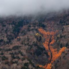 Лесной пожар...