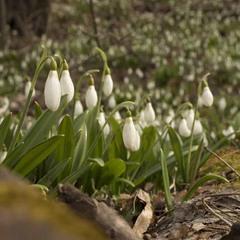 Чекаєте весняних ароматів?