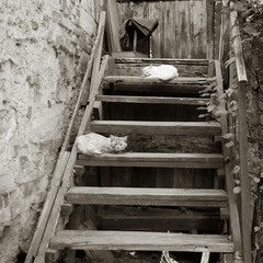 На старой лестнице