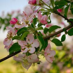 Этюд - весна