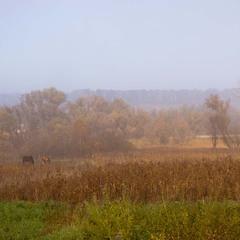 После тумана
