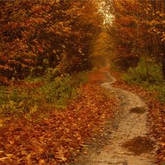 Стежинка в осінь