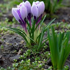 Весняна квітка