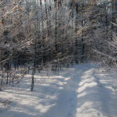 В лісову казку...