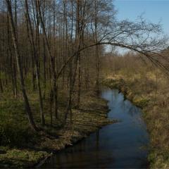 Лісова річечка...