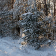 Краєм лісу...