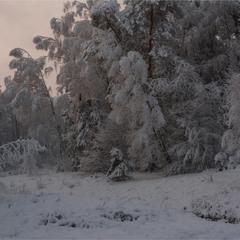 Про перший сніг...