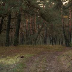 Про ліс...