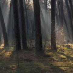 Лісові ліхтарики...