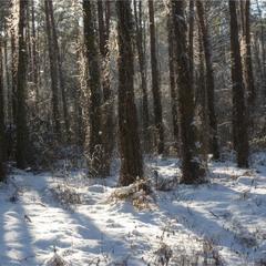 В дрімучому лісі...