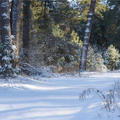 Зимовою стежиною