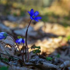 Весняне пробудження