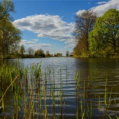 На сільському ставі