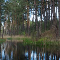 Лісова річка Косма