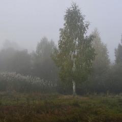 Жовтневі тумани