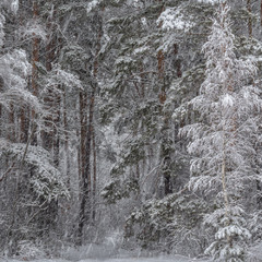 Спогади про справжню зиму