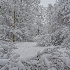 І знову про зимовий ліс
