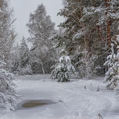 Зимовими стежками