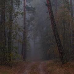 Сезон туманів