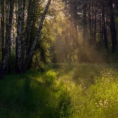 У лісі темному...